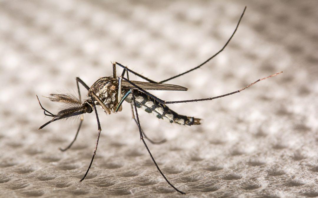 Dengue preocupa o estado de Goiás com suspeita de 34 óbitos em 2019